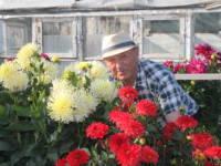 В память о Розе цветут георгины